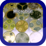 Microbial Button